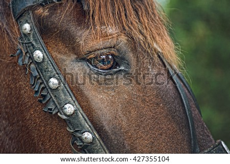 Horse head closeup - stock photo