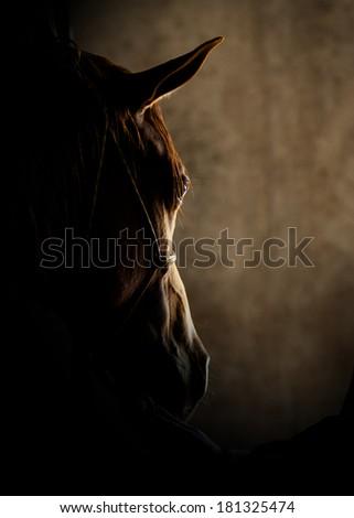 Horse head detail - stock photo