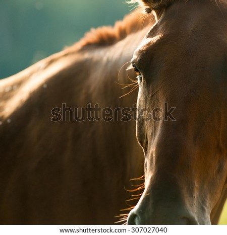 horse head detail closeup (small depth of field) - stock photo