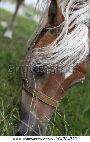 horse head eating green grass - stock photo