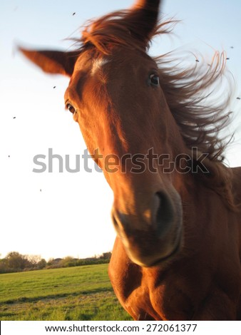 horse head with flies