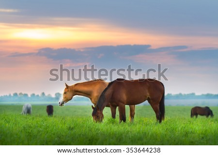Horse herd on pasture at sunrize - stock photo
