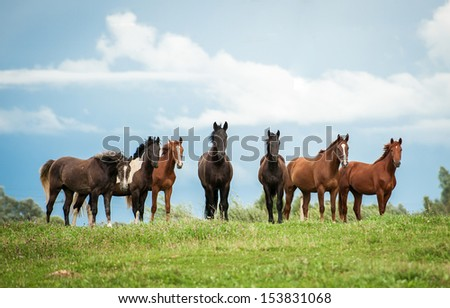 Horse herd on the pasture - stock photo