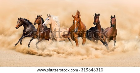 Horse herd run in desert sand storm - stock photo