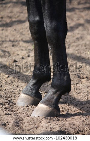 Horse hoof close up