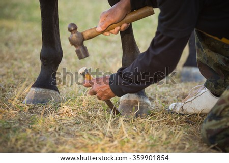 Horse Hoof Trimming in the Village