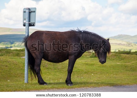 Horse humor ...?! Horse / pony scratching on sign post - or waiting for a bus? Either way it's just horsing around... - stock photo