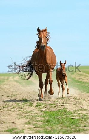 Horse hurrying at a gallop - stock photo