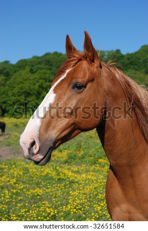 Horse in a cheshire stables, England - stock photo