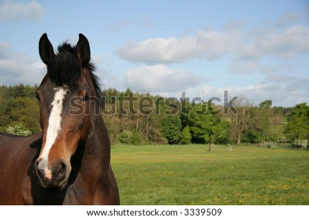 Horse in a country field with room for copy space