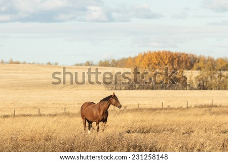 horse in a field, farm animals, nature series - stock photo