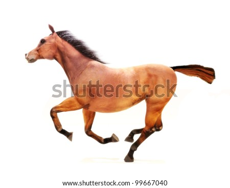 Horse in a gallop on a white background. Part of an animal theme series. - stock photo