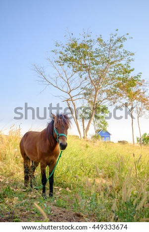 Horse in a green farm - stock photo
