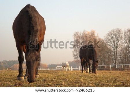 horse in a green meadow in sunny day, animal series - stock photo