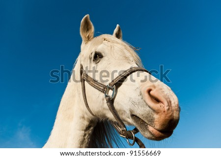 Horse in a green meadow in sunny day, animals series