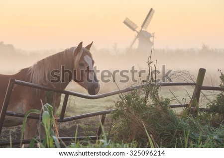 Horse in a meadow near a windmill during a foggy, autumn sunrise. Groningen, Netherlands - stock photo