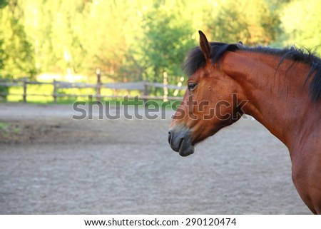 Horse in a paddock on a clear summer day - stock photo