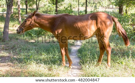 horse in a park on the nature