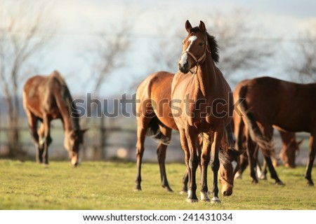 Horse in a pasture. - stock photo