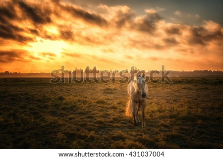Horse in a Pasture with Orange Sunset - stock photo
