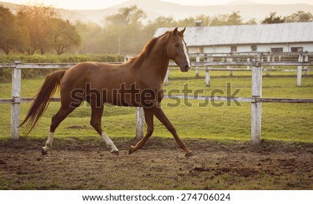 Horse in a stable running and joying at sunset - stock photo