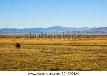Horse in cantabria field spain - stock photo