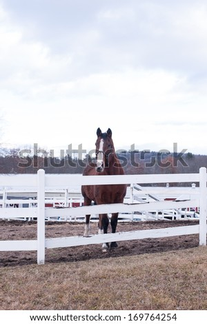 Horse in corral - stock photo