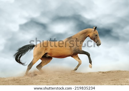 horse in dust - stock photo