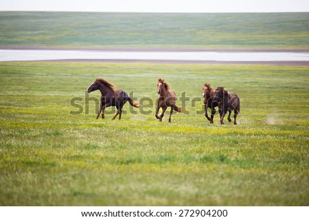 Horse in field on green grass - stock photo