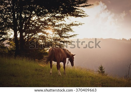 horse in field. on the sunset.