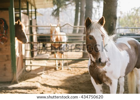 Horse in front of a barn - stock photo