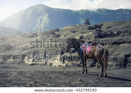 Horse in front of mountains near Volcano Bromo, Java, Indonesia