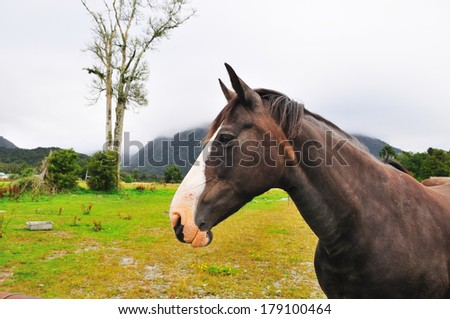 horse in green meadow - foggy refreshing friendly nature landscape mountains outdoor prairie
