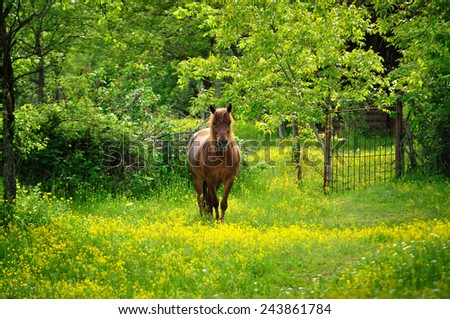 Horse in green pastures. Country landscape. - stock photo