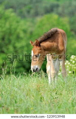 Horse in meadow. Summer day - stock photo
