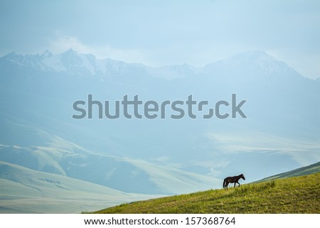 Horse in mountains going up. Shallow focus on horse - stock photo