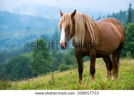 Horse in mountains on green summer pasture
