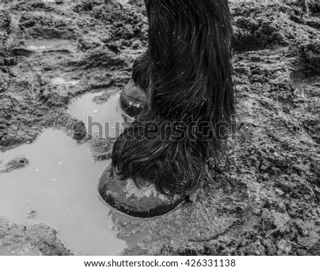 Horse in Mud Puddle Black and White   - stock photo