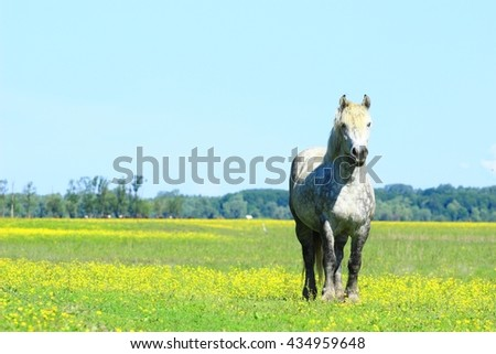 Horse in nature  - stock photo