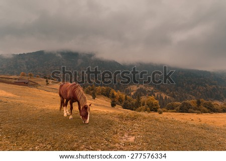 Horse in panoramic autumn mountain landscape with heavy stormy clouds. Carpathian mountains. Ukraine. - stock photo