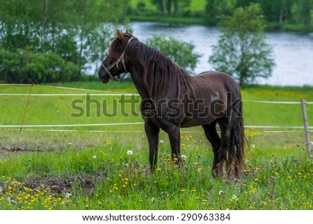 Horse in pasture and river background.