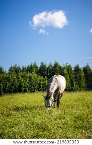 Horse in Pieniny - Poland