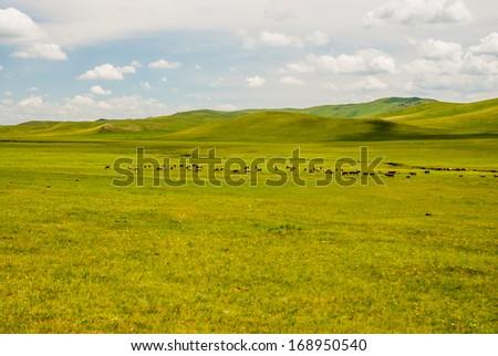 horse in prairie, Inner-Mongolia, China - stock photo