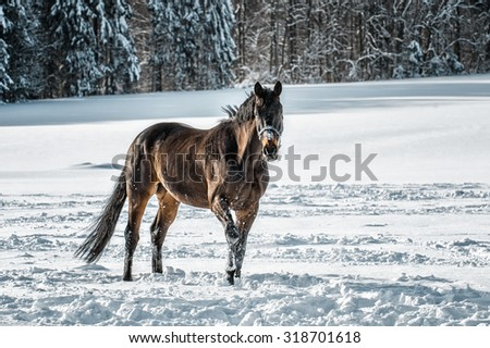 Horse in snow - stock photo