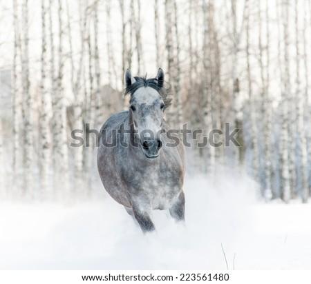 horse in snowdrift - stock photo