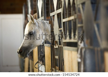 Horse in stable - stock photo
