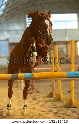 Horse in the arena jumping over obstacles - stock photo