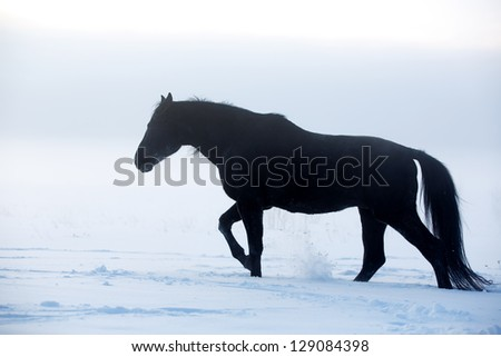 horse in the fog in winter