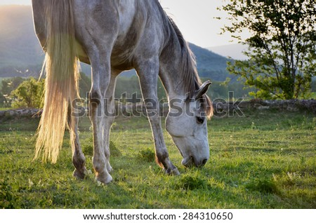 Horse in the light - stock photo