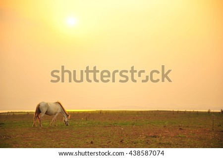 Horse in The Meadow During Sunset - stock photo
